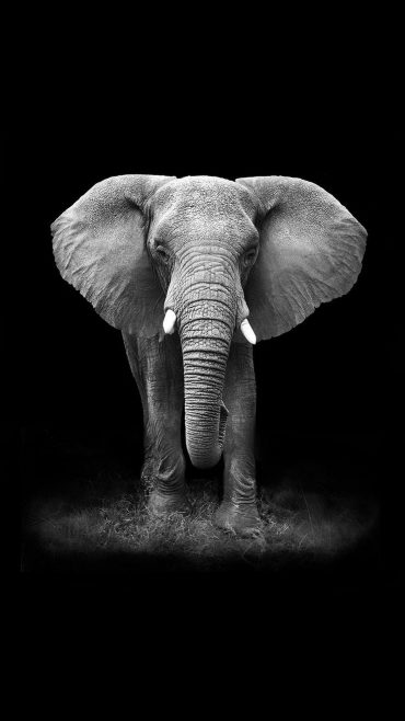 Elephant free wallpaper for Android