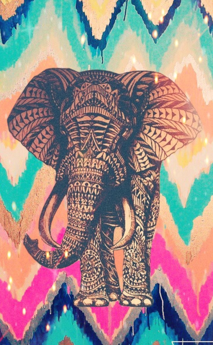 Elephant best iPhone wallpaper