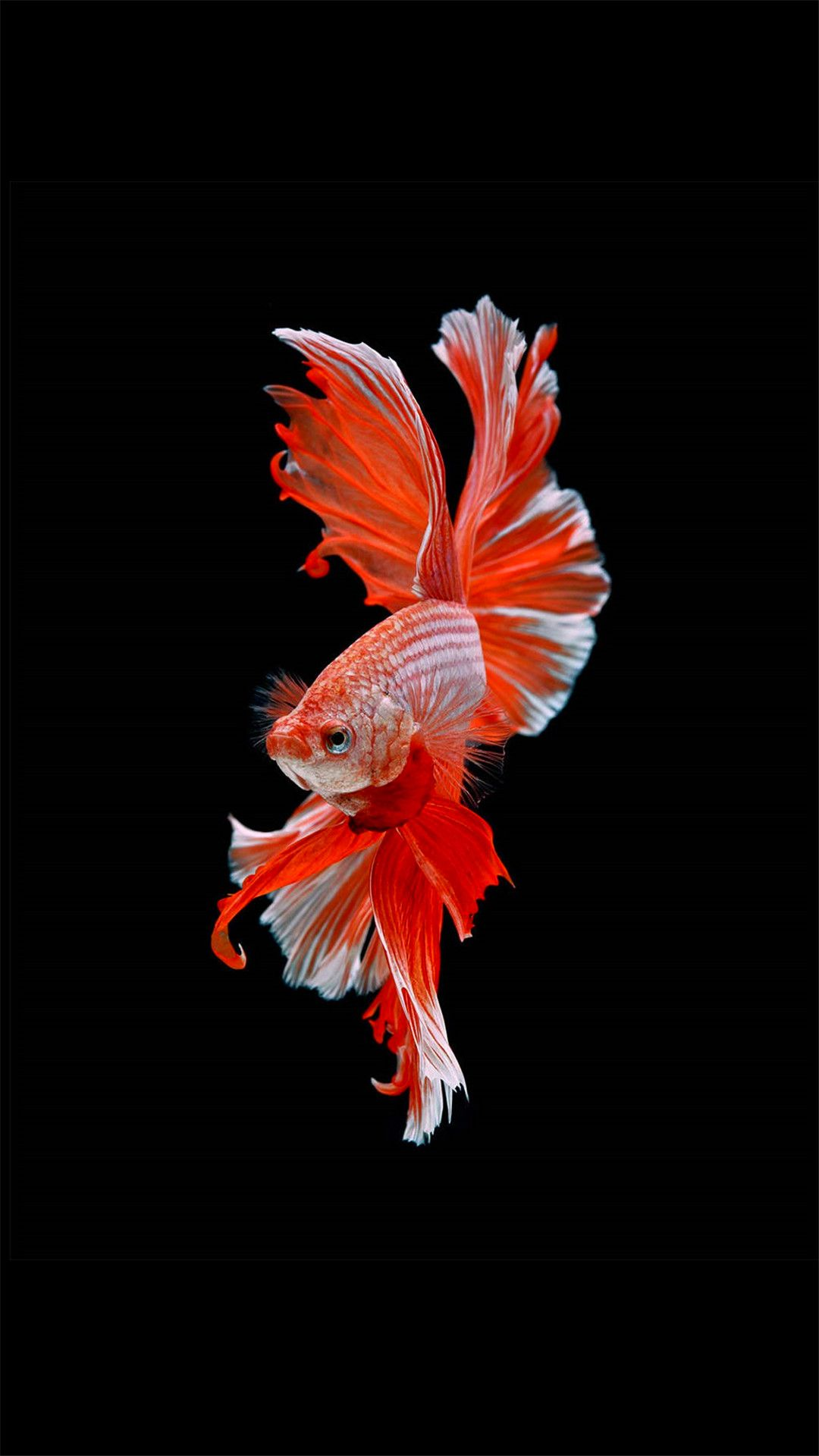 Fish hd wallpaper for Android