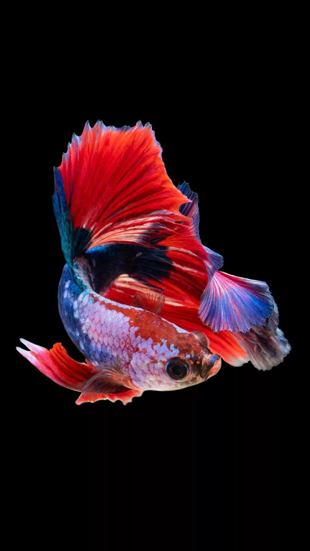 Fish iPhone lock screen wallpaper