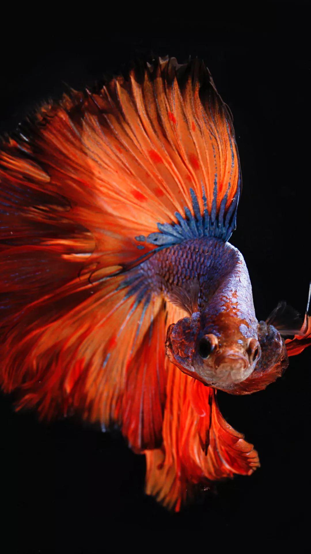 Fish iPhone xs wallpaper download