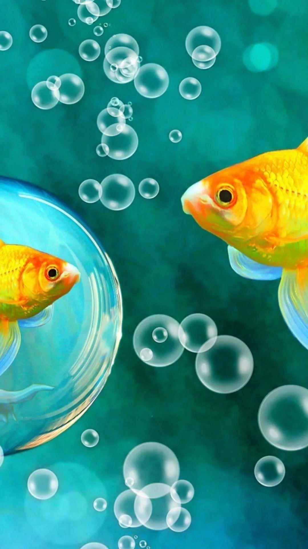 Fish iPhone xs max wallpaper