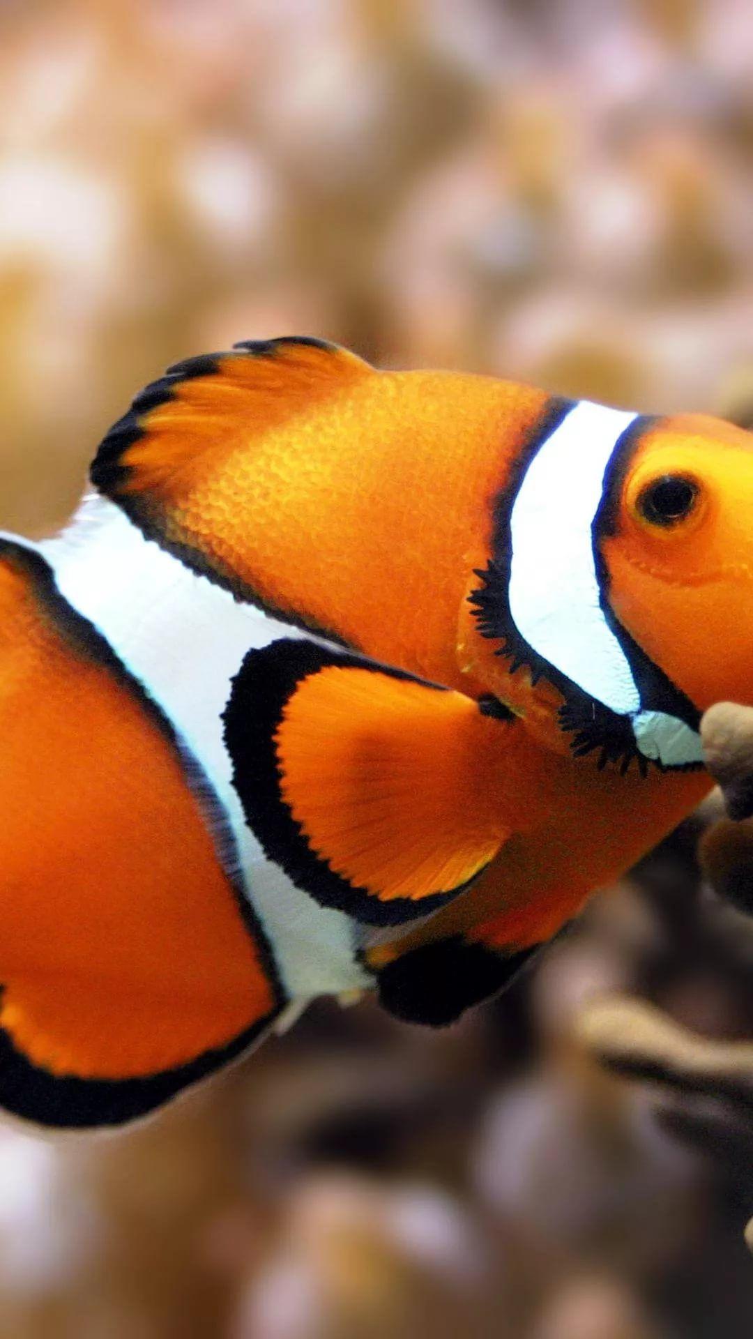 Fish screen saver wallpaper