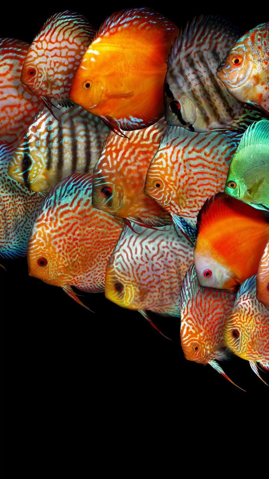 Fish samsung wallpaper