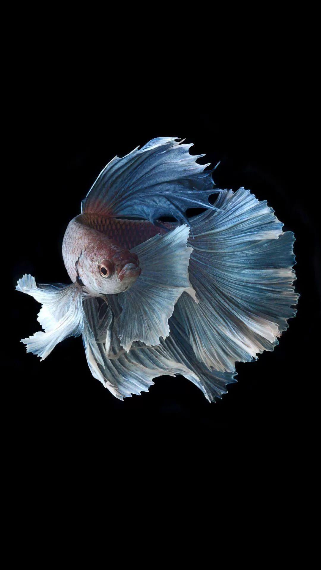 21 Fish iPhone Wallpapers   Wallpaperboat