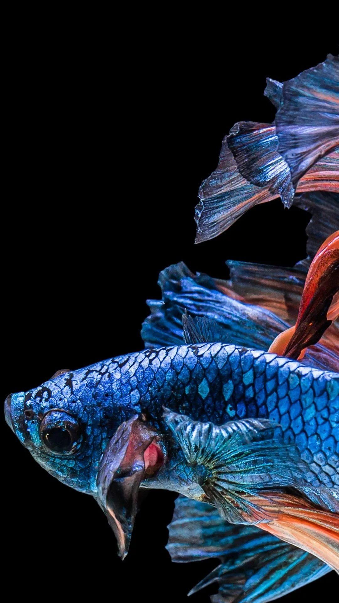 Fish iPhone 8 plus wallpaper