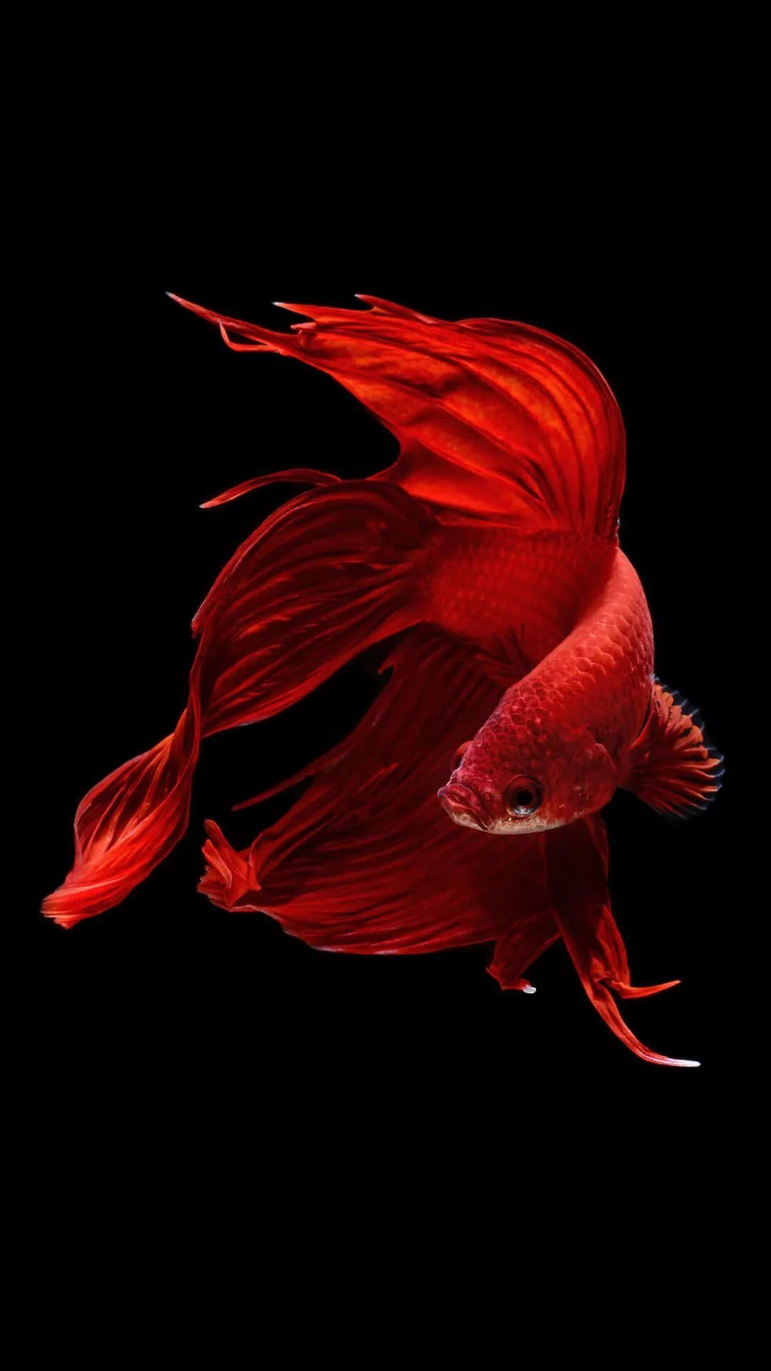 Fish iPhone home screen wallpaper