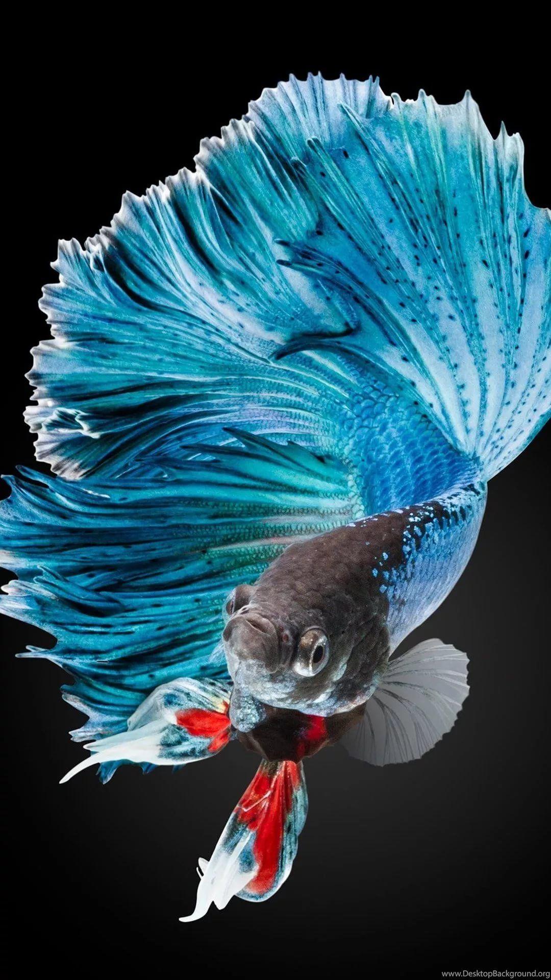 Fish iPhone 7 plus wallpaper