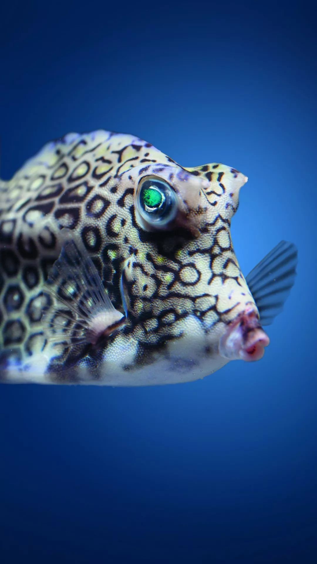 Fish good wallpaper for iPhone