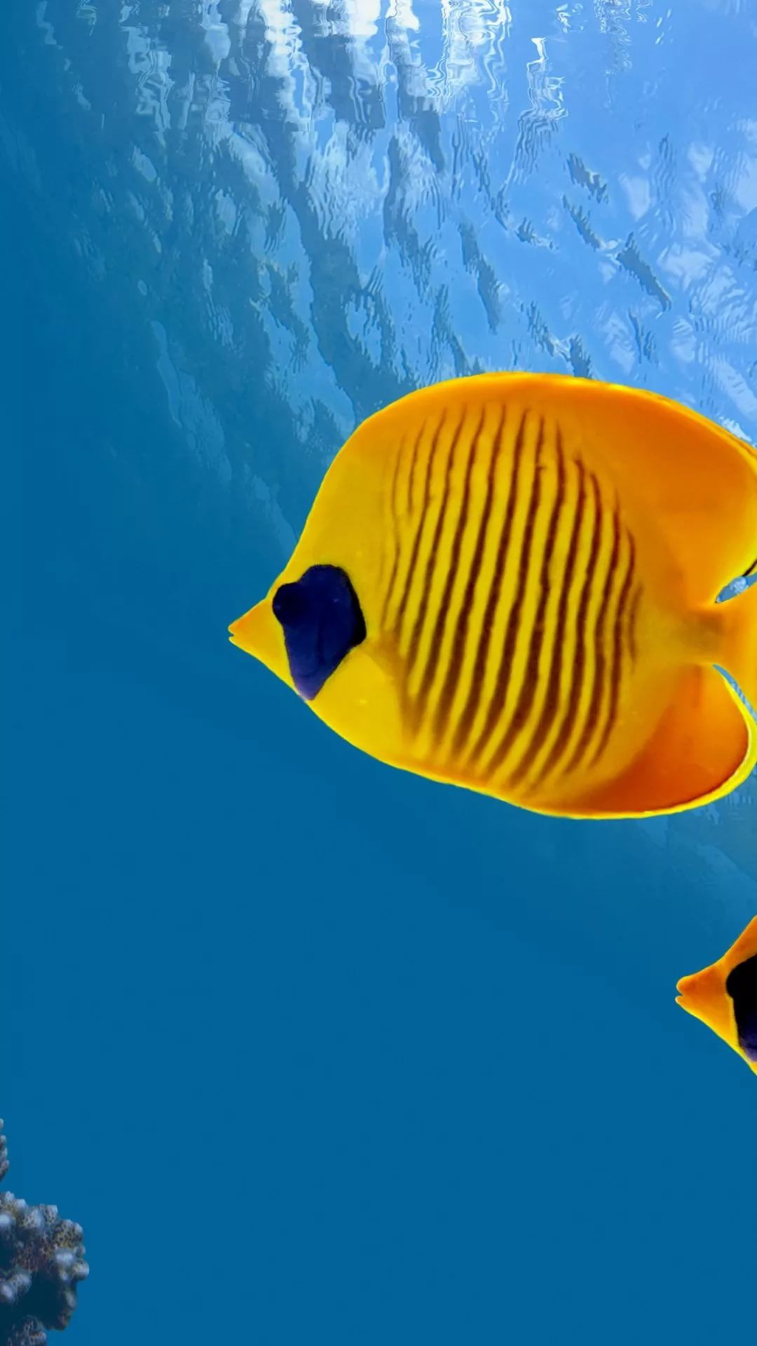 Fish iPhone 7 wallpaper hd
