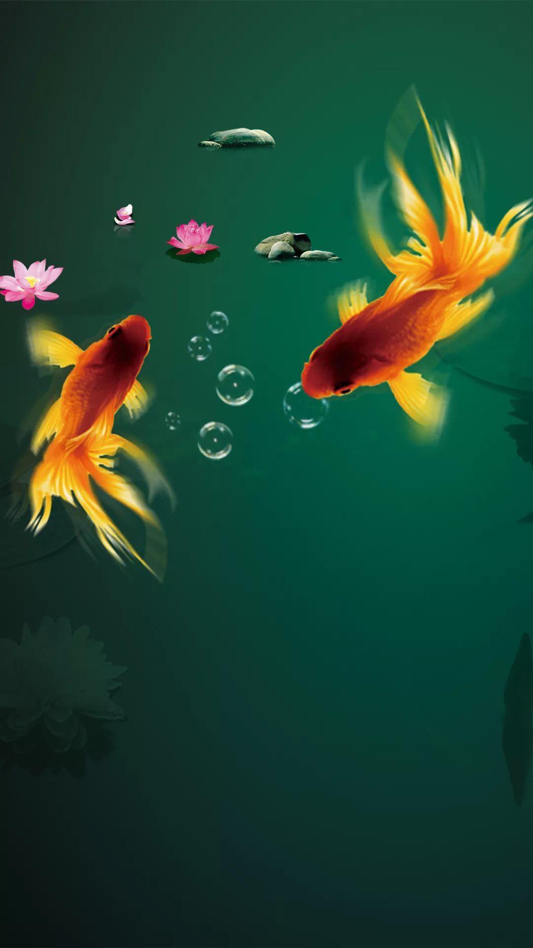 Fish best iPhone wallpaper