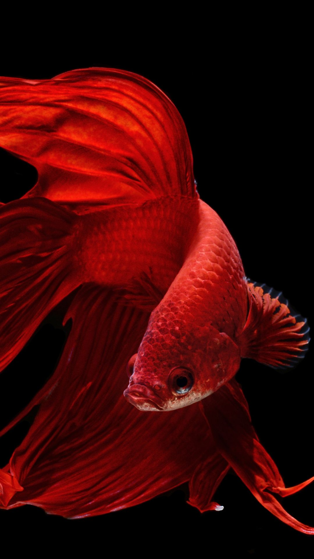 Fish Clean hd wallpaper for Android