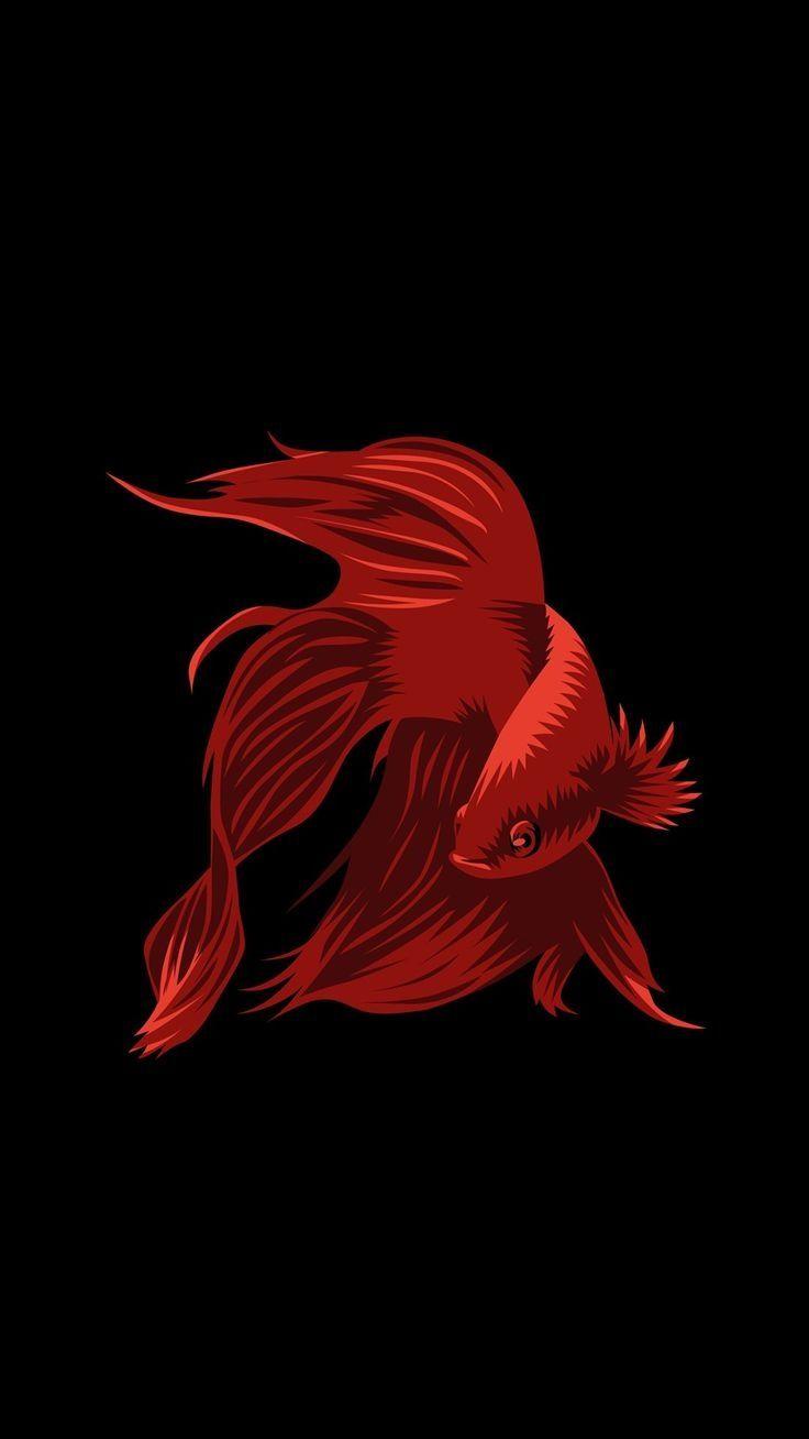 Fish Clean iOS 8 wallpaper