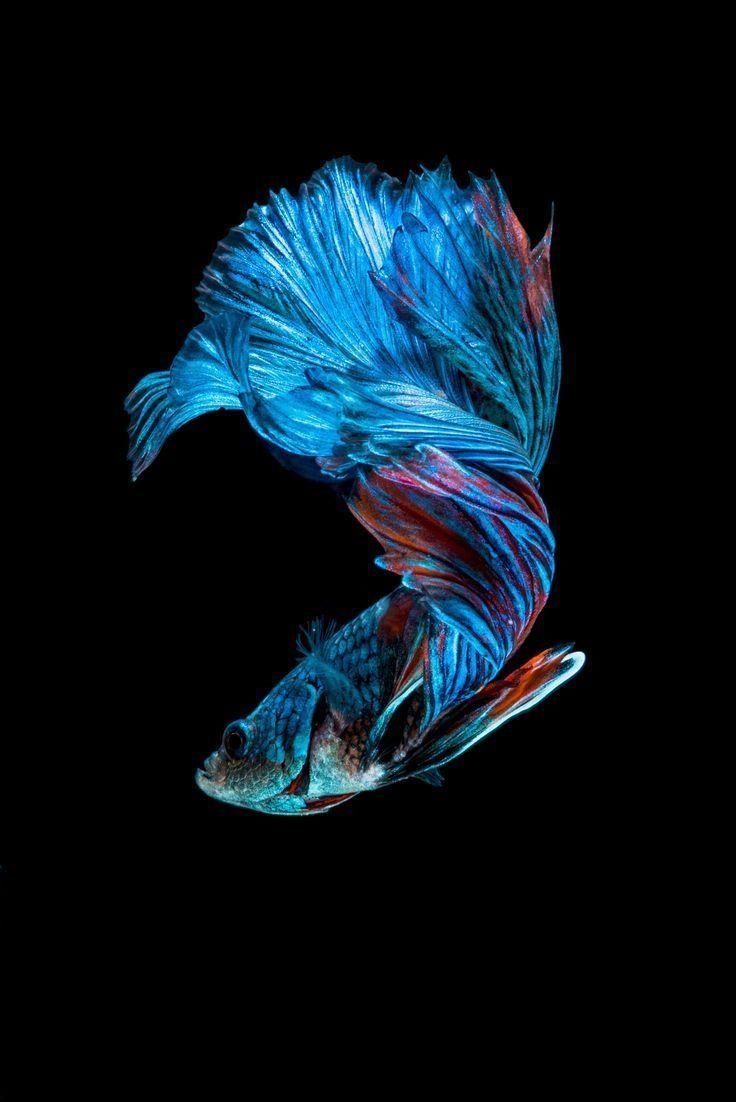 Fish Clean Apple iPhone wallpaper