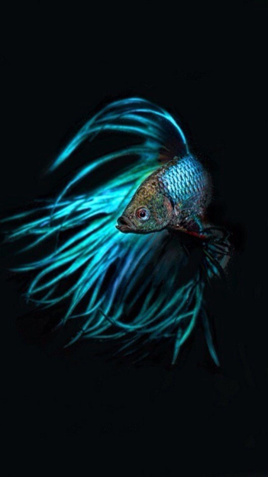 Fish Clean iPhone x wallpaper