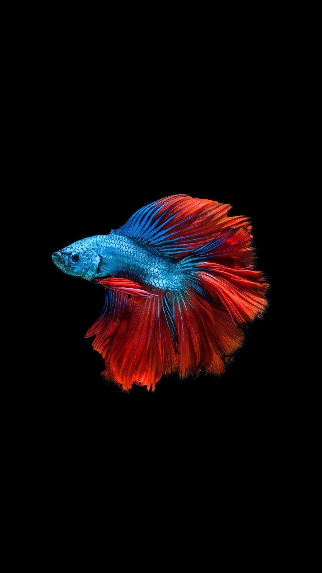Fish Clean iPhone 5s wallpaper