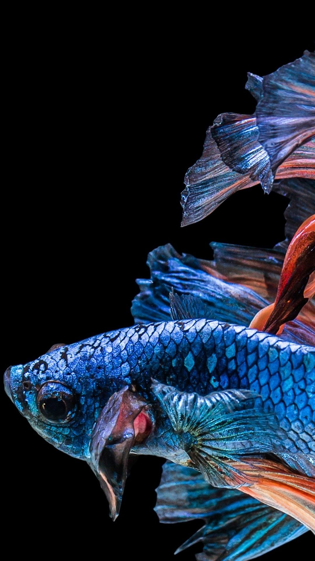 Fish Clean Galaxy Wallpaper