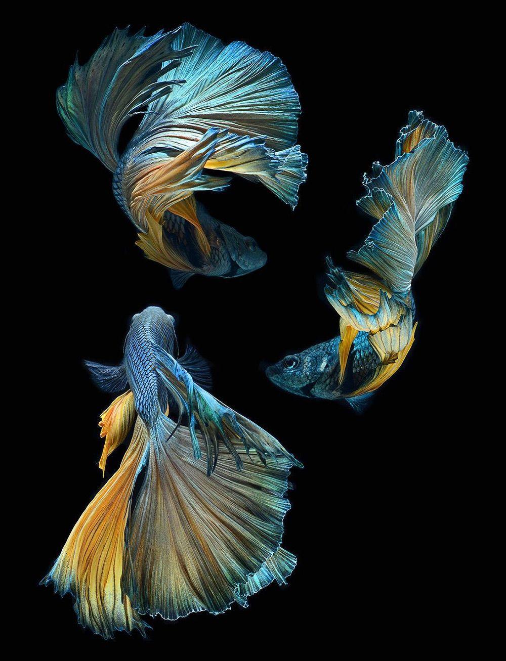 Fish Clean iPhone 6 Wallpaper