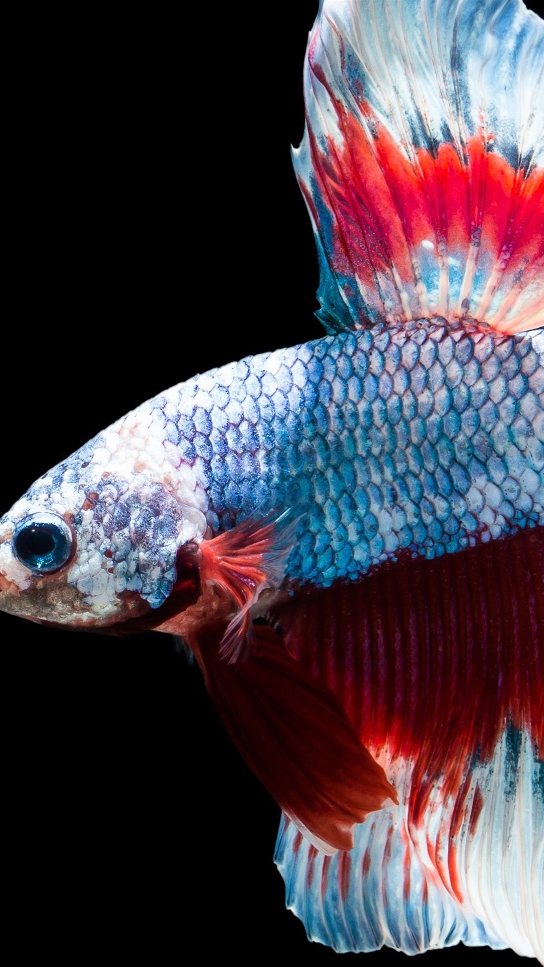 Fish Clean Cool iPhone Wallpaper