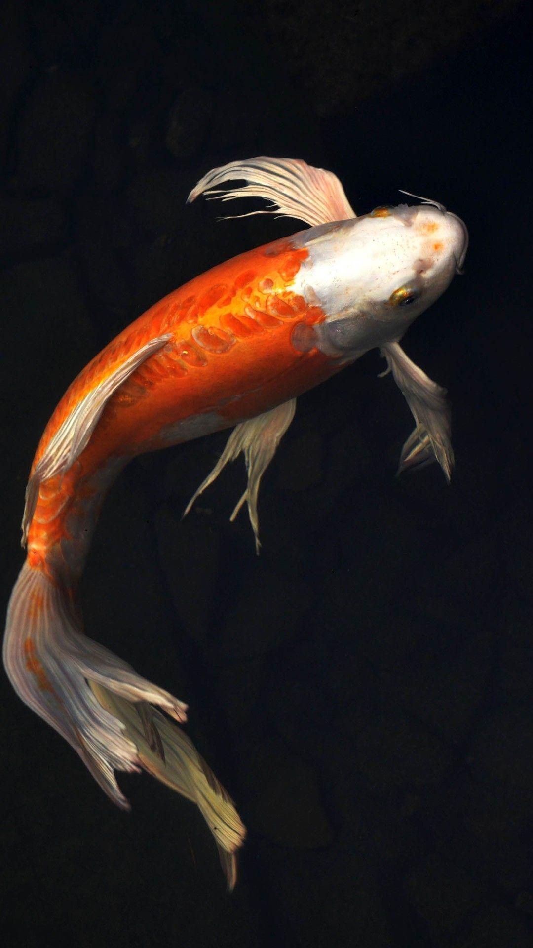 Fish Clean iPhone xs wallpaper download