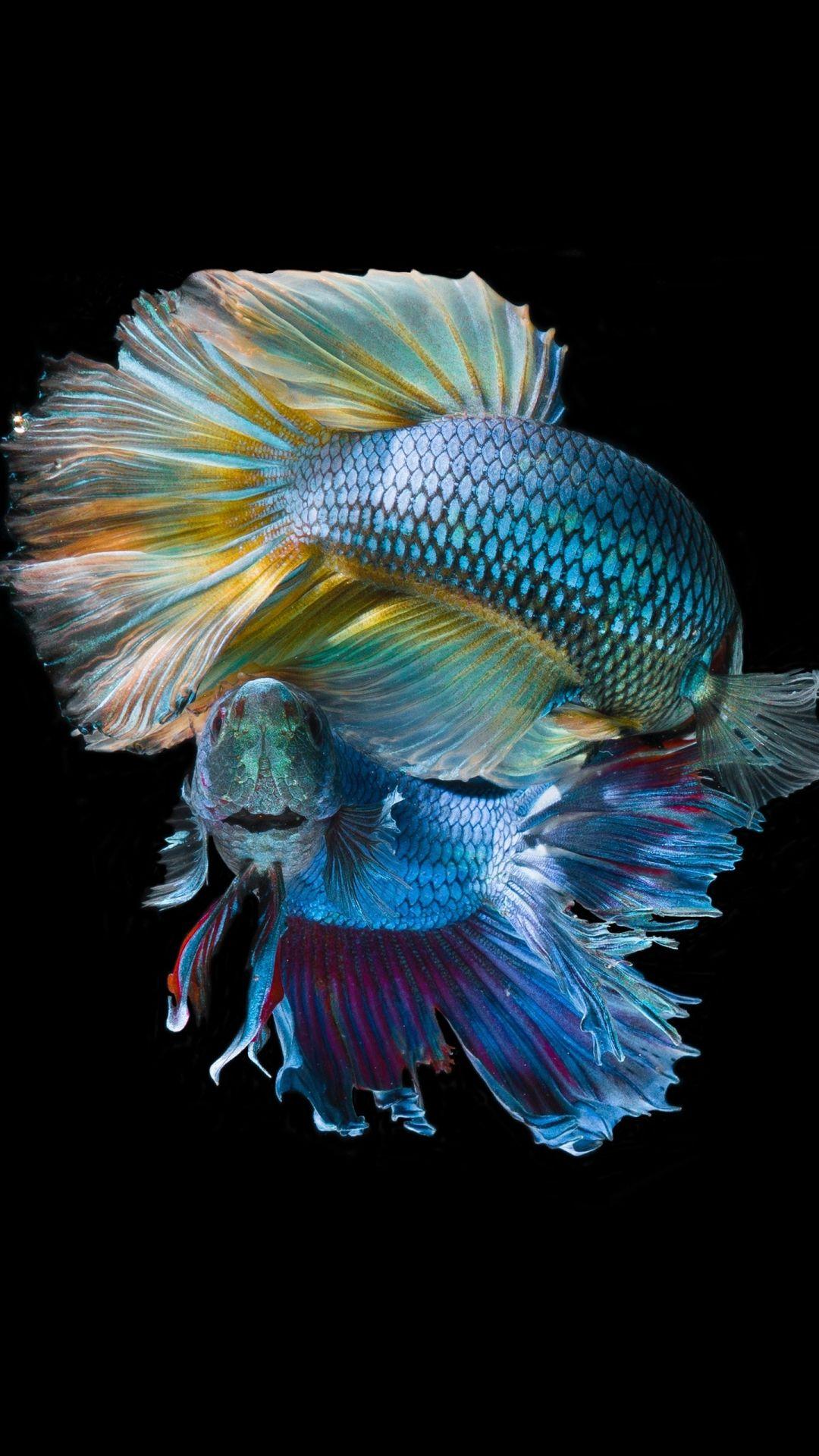 Fish Clean iPhone 5 wallpaper