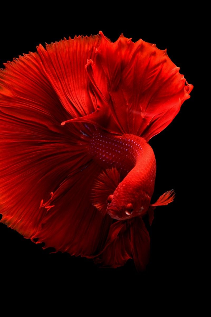 Fish Clean live wallpaper iPhone