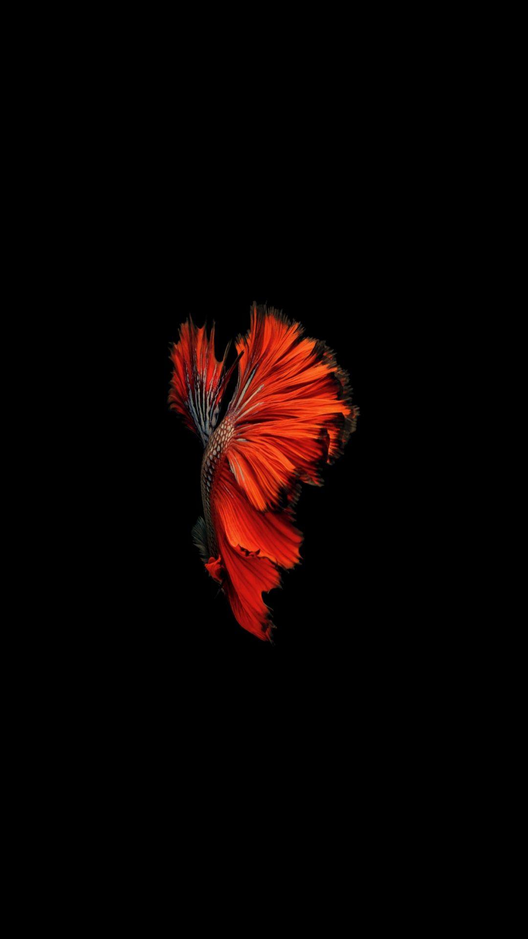 Fish Clean wallpaper 1080x1920