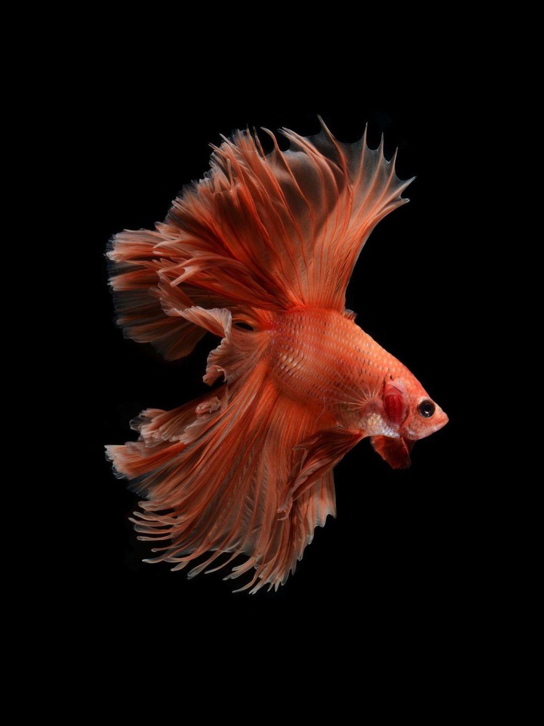 Fish Clean iPhone 6s plus wallpaper