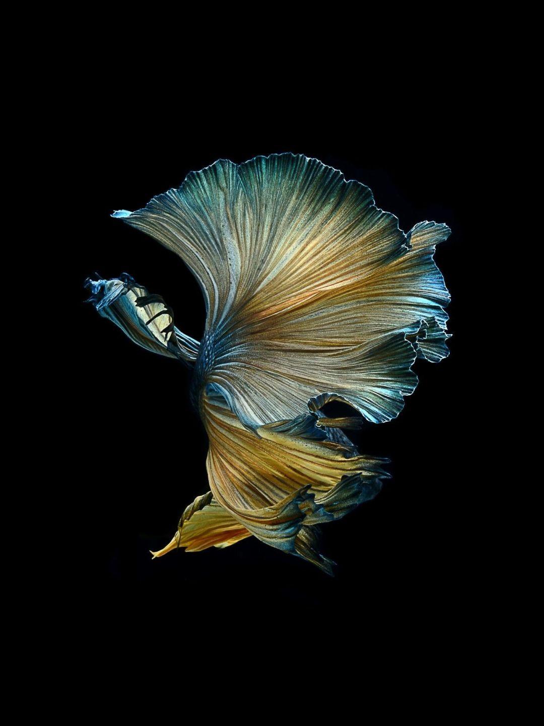 Fish Clean iPhone 6s wallpaper