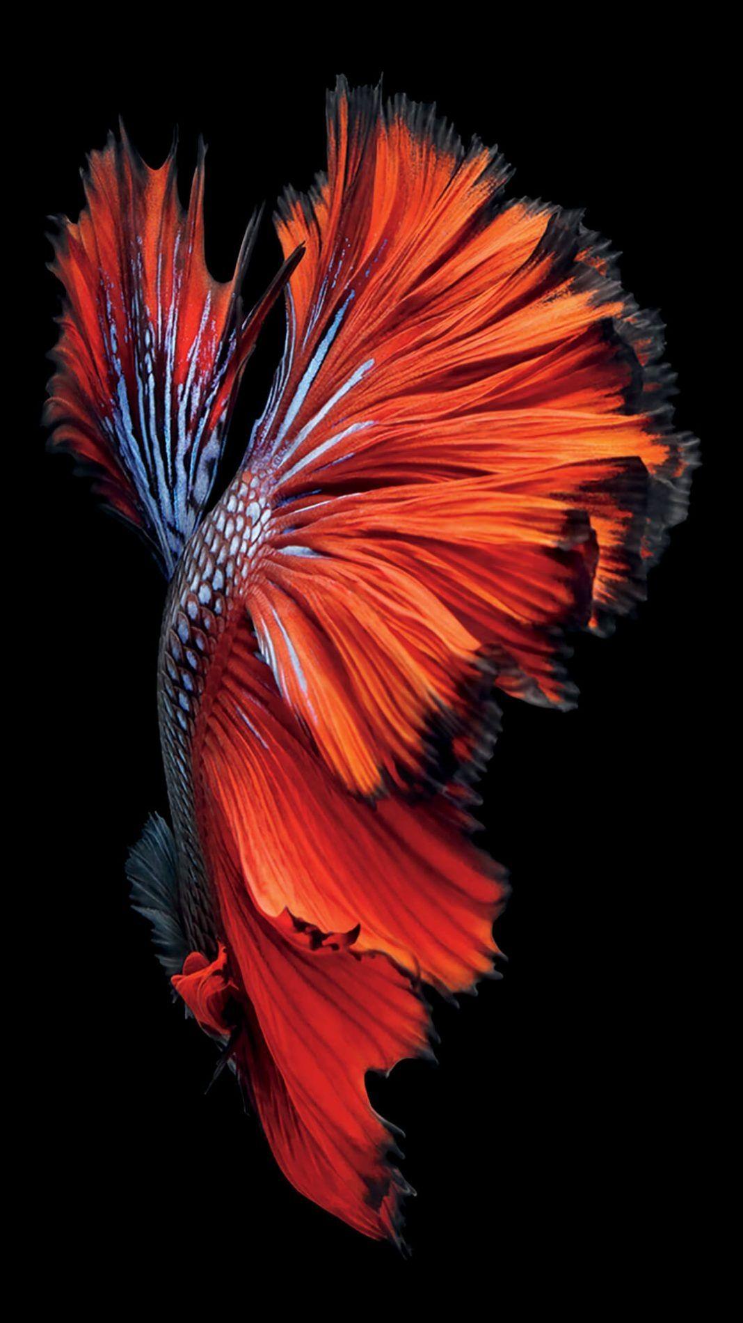 Fish Clean iPhone home screen wallpaper