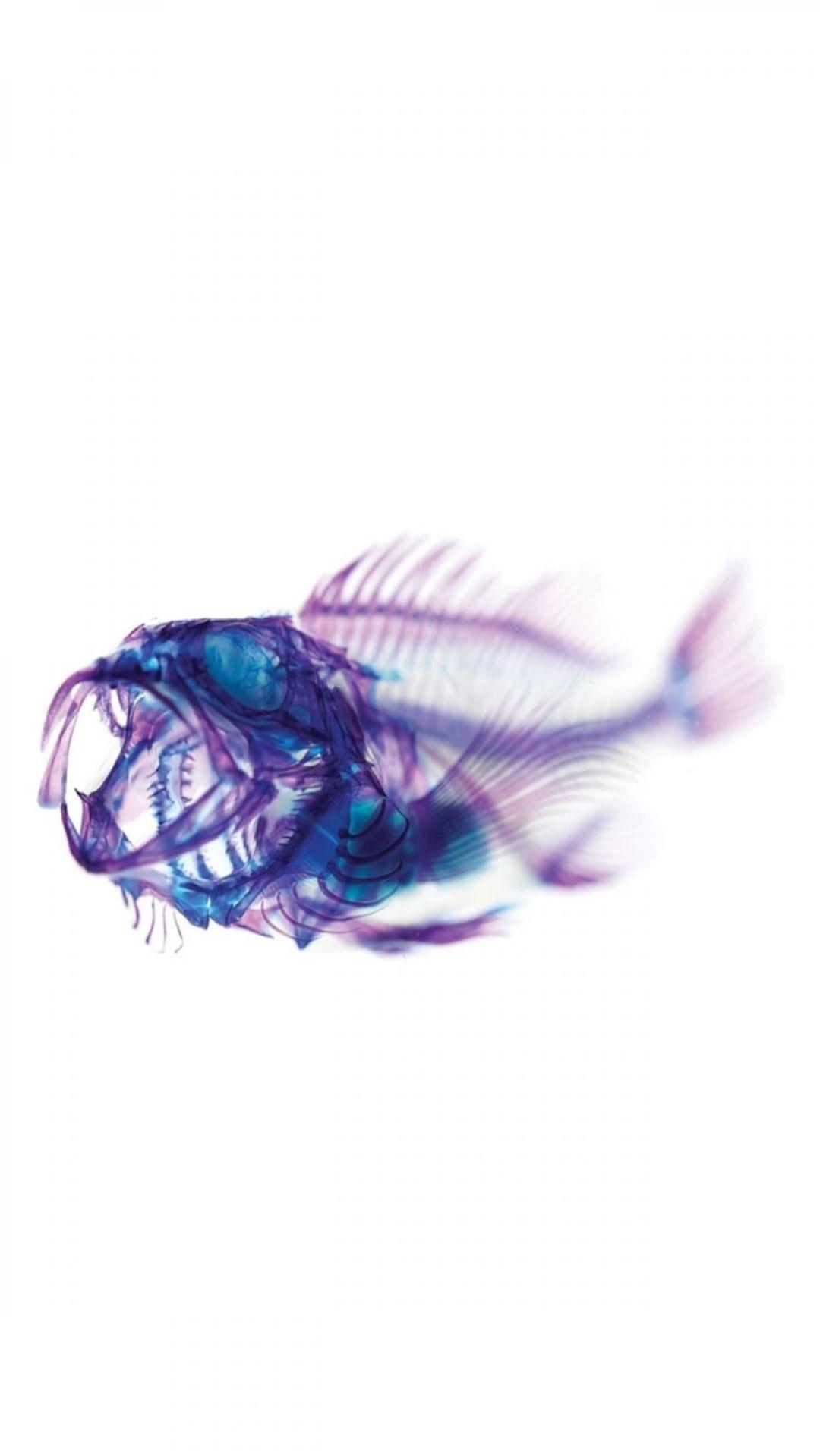 Fish Clean s7 wallpaper