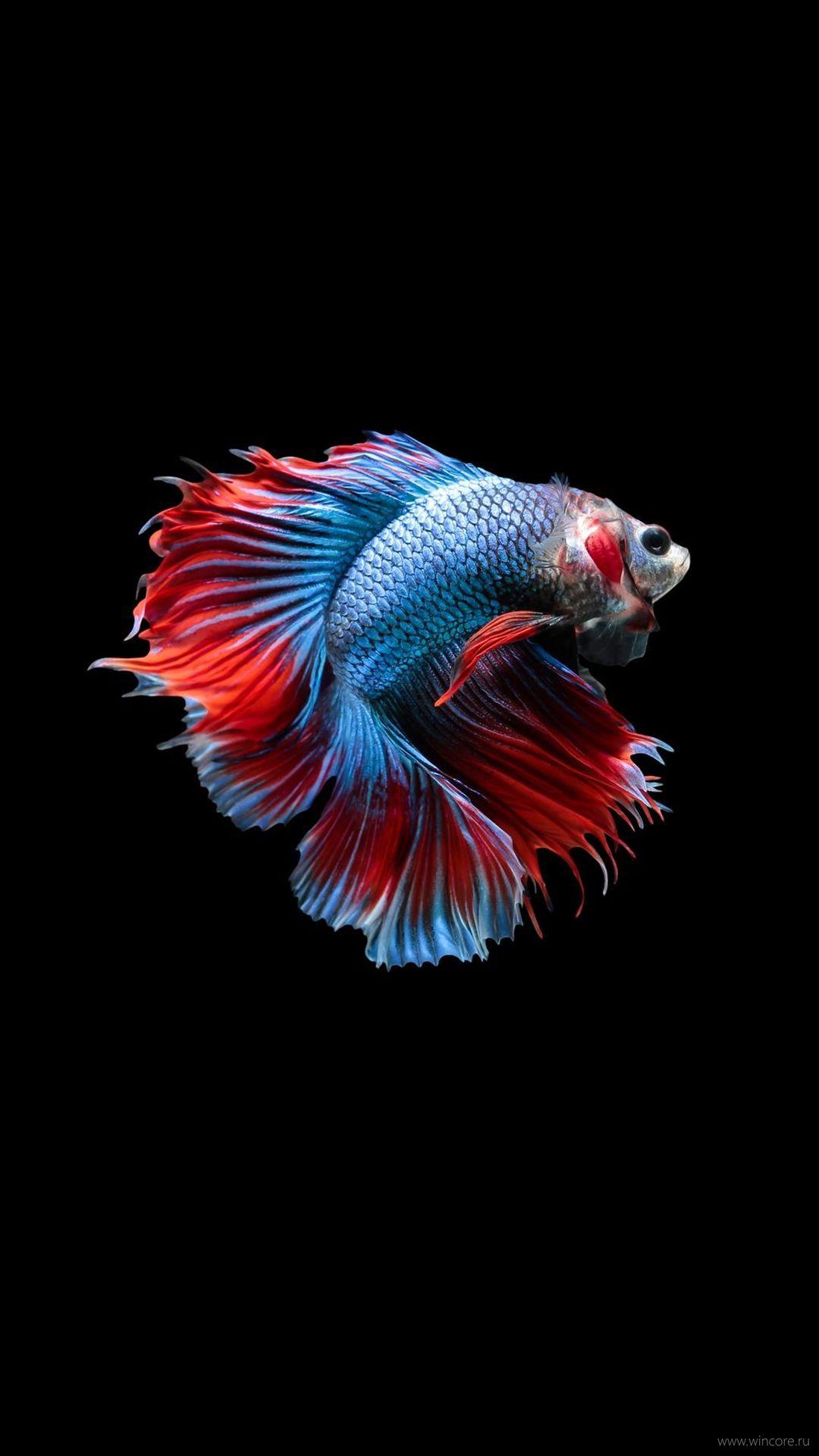 Fish Clean XS Max wallpaper