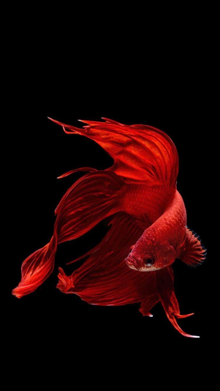 Fish Clean color wallpaper