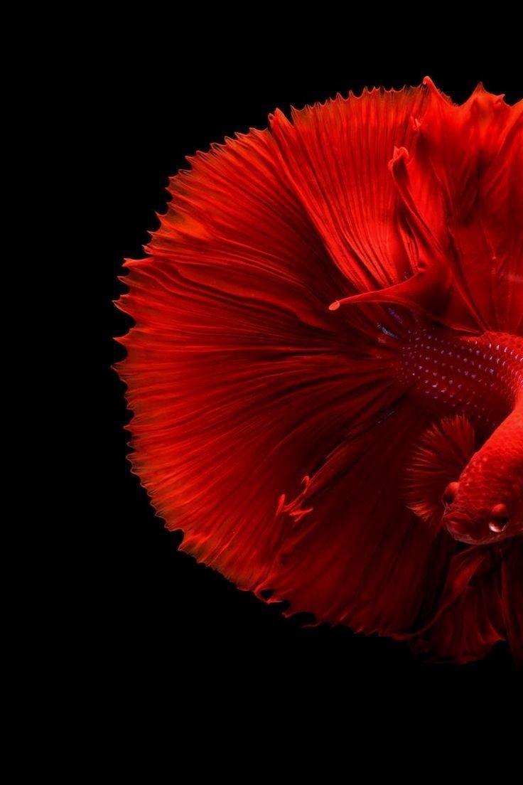 Fish Clean screen saver wallpaper