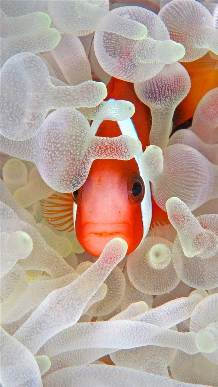 Fish Clean Galaxy wallpaper hd