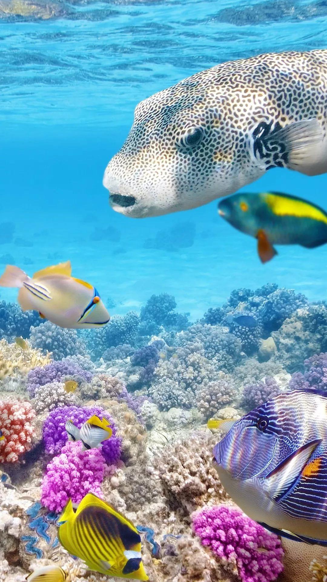 Free Tropical Fish lock screen wallpaper