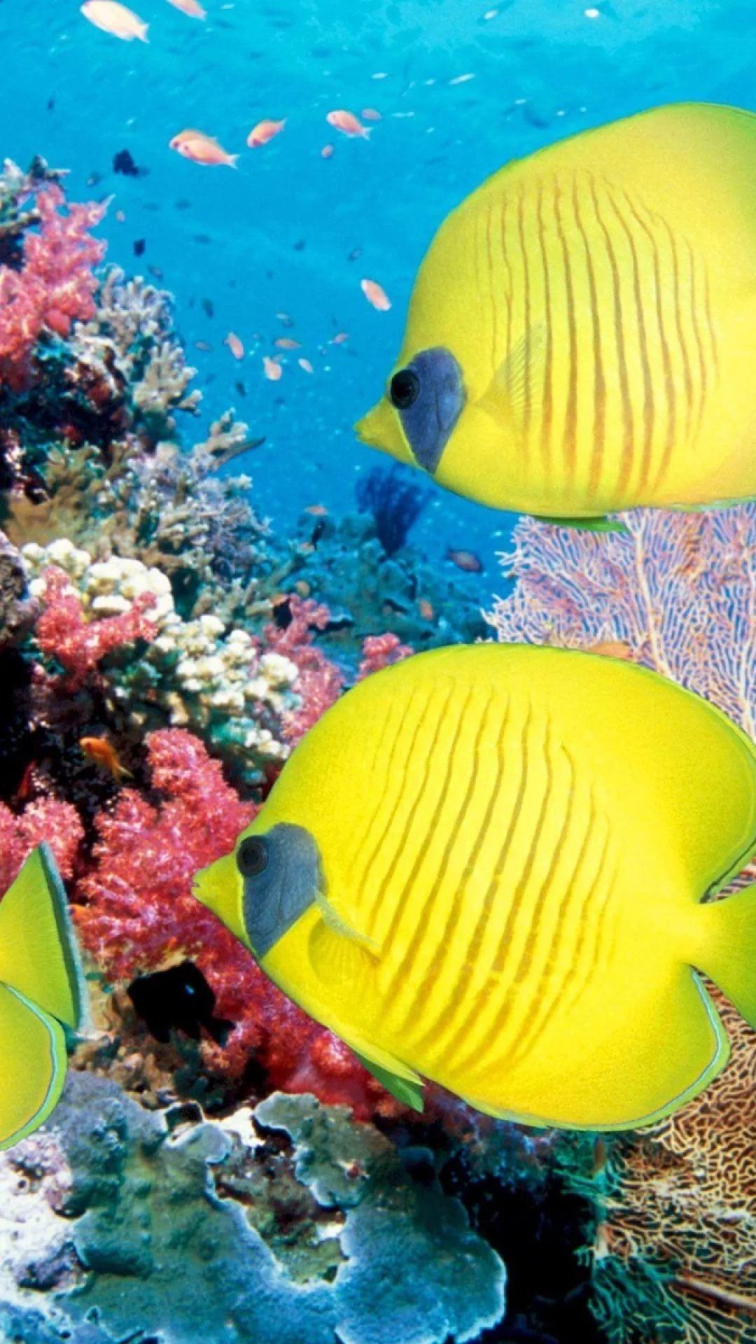 Free Tropical Fish iPhone Wallpaper HD