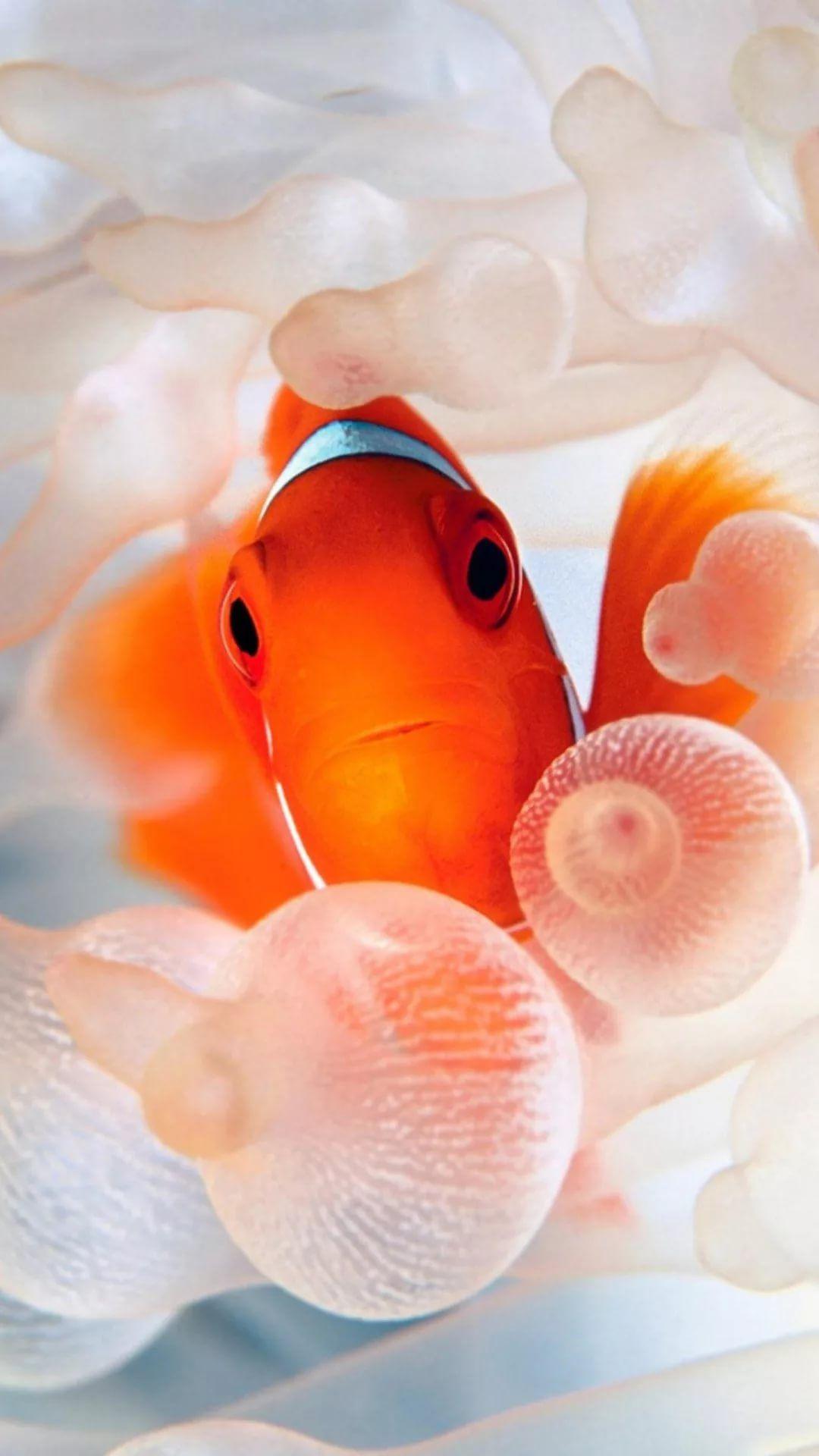 Free Tropical Fish wallpaper 1080x1920