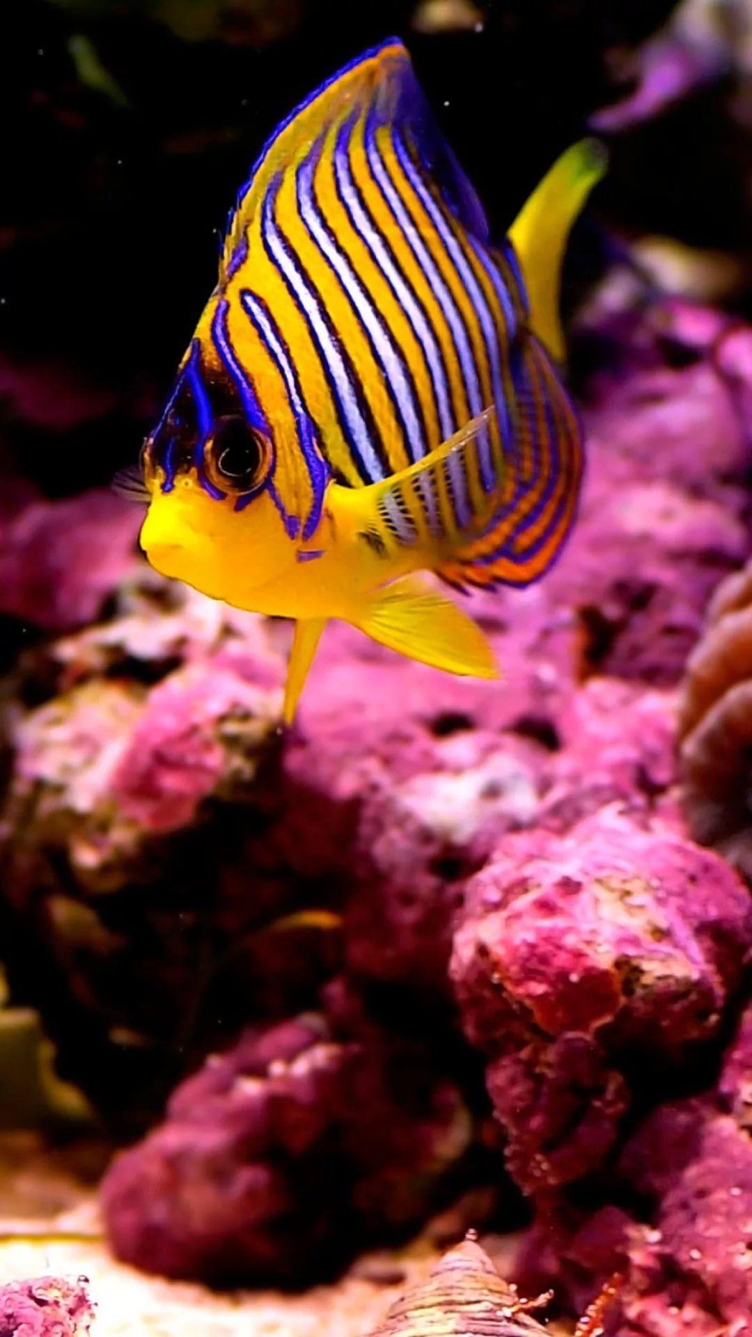 Free Tropical Fish XS Max wallpaper