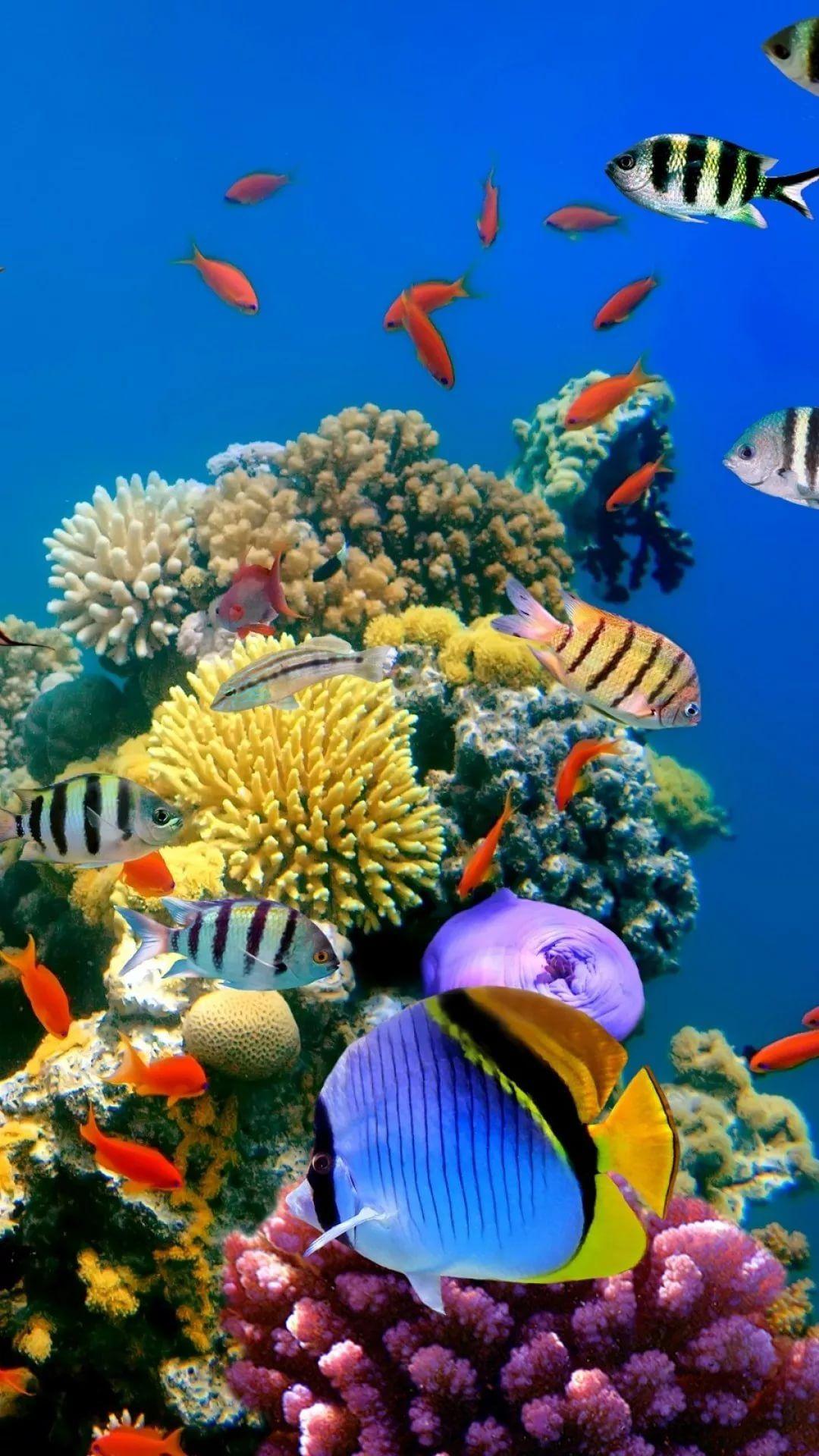 Free Tropical Fish Galaxy wallpaper hd