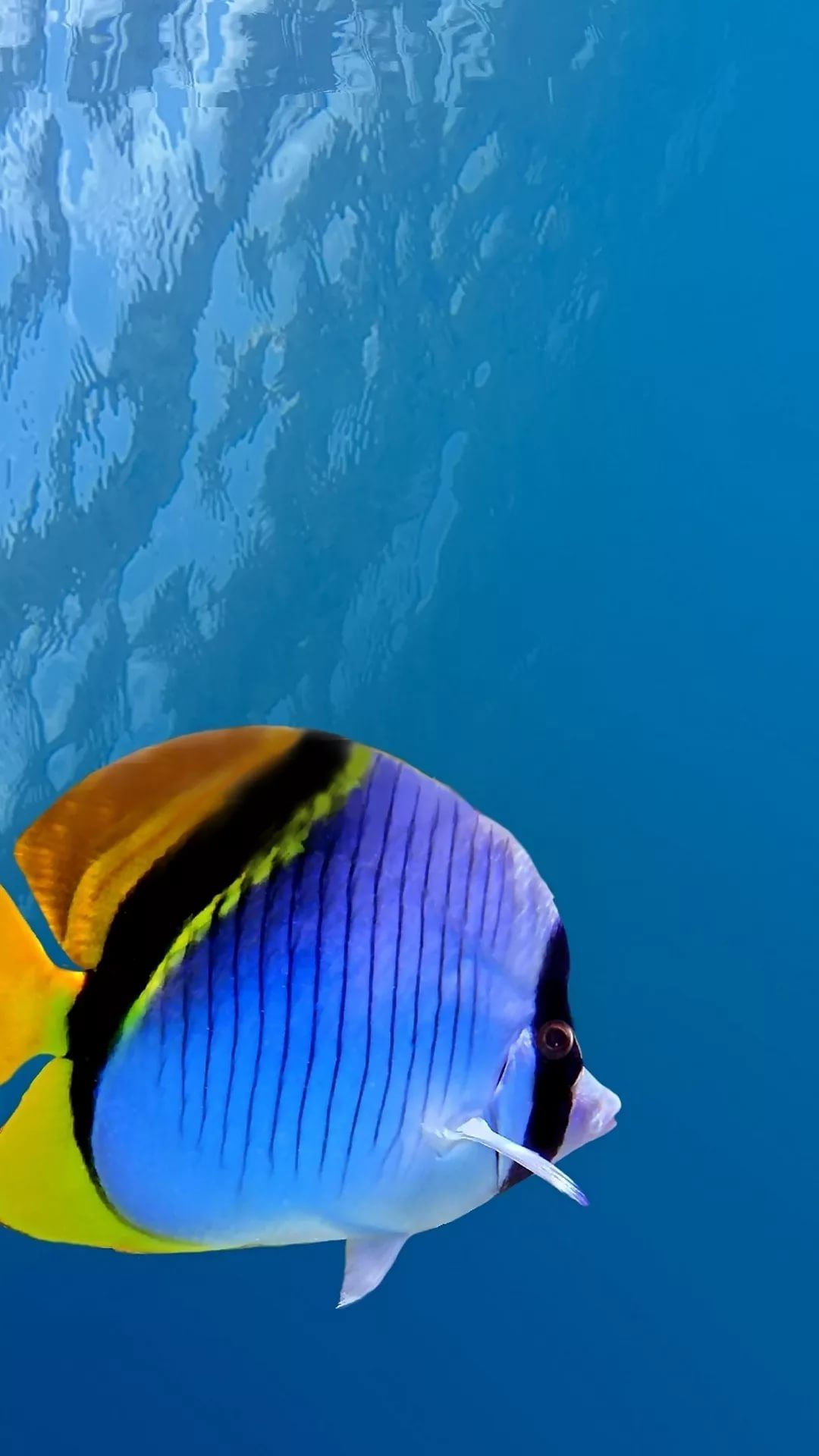 Free Tropical Fish Galaxy wallpaper iPhone