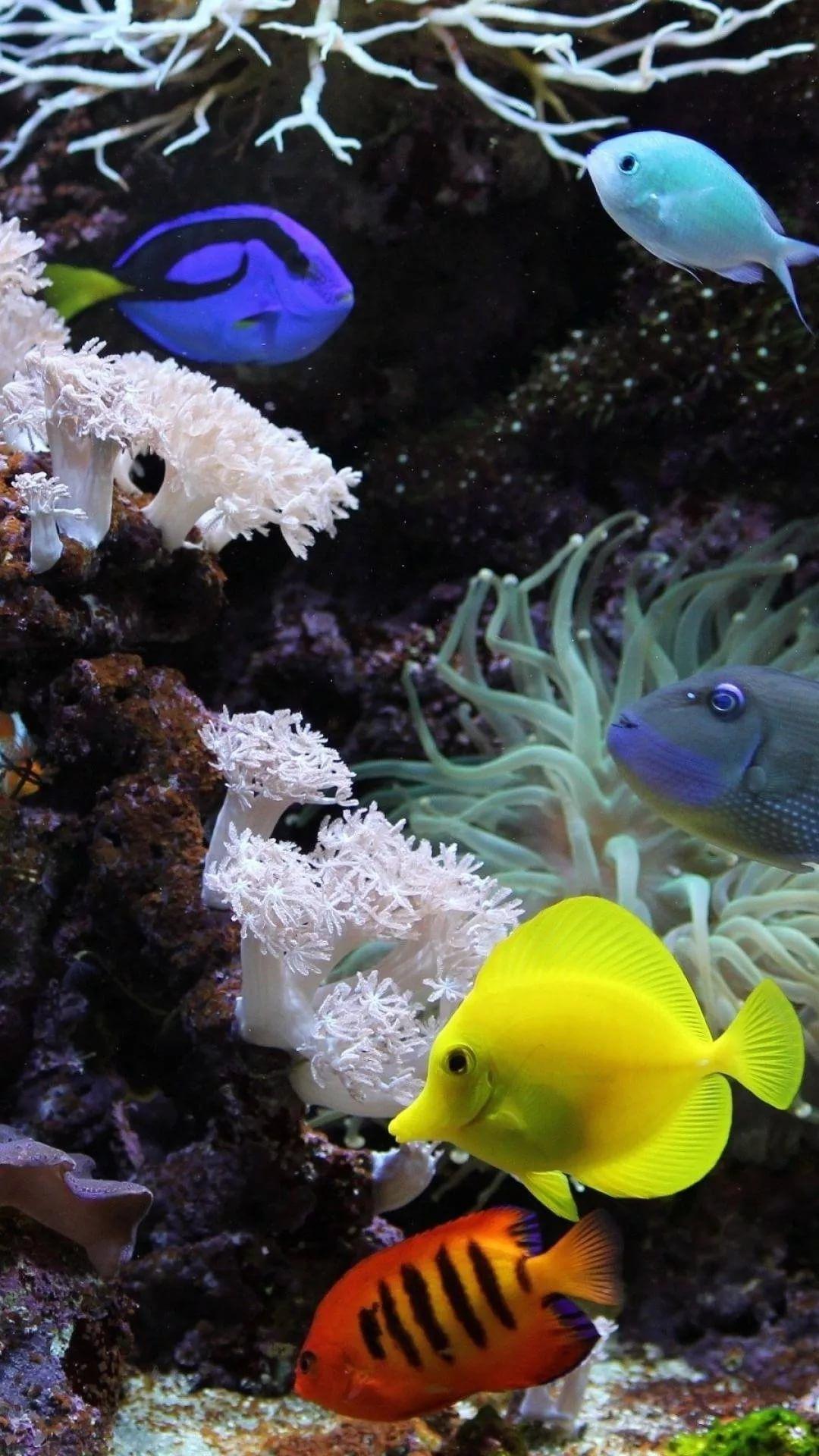 Free Tropical Fish Galaxy s9 wallpaper
