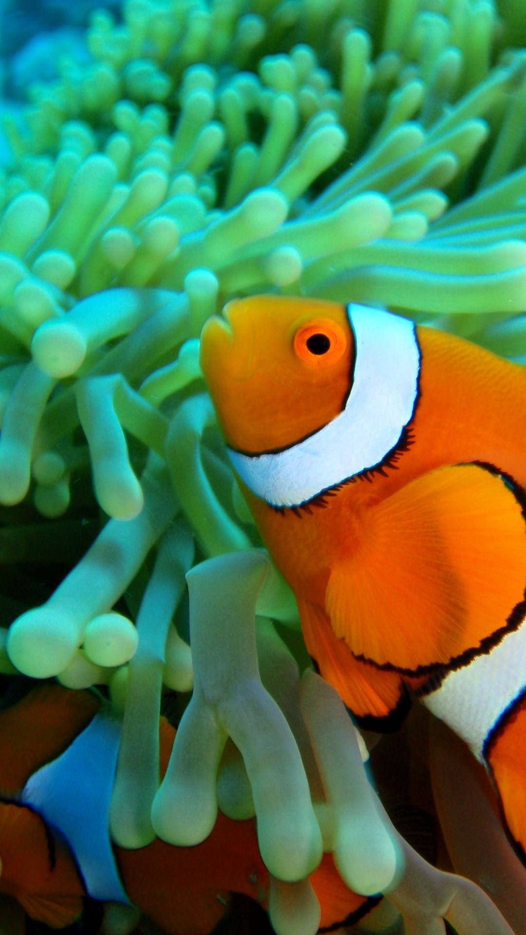 Free Tropical Fish iPhone 7 Wallpaper