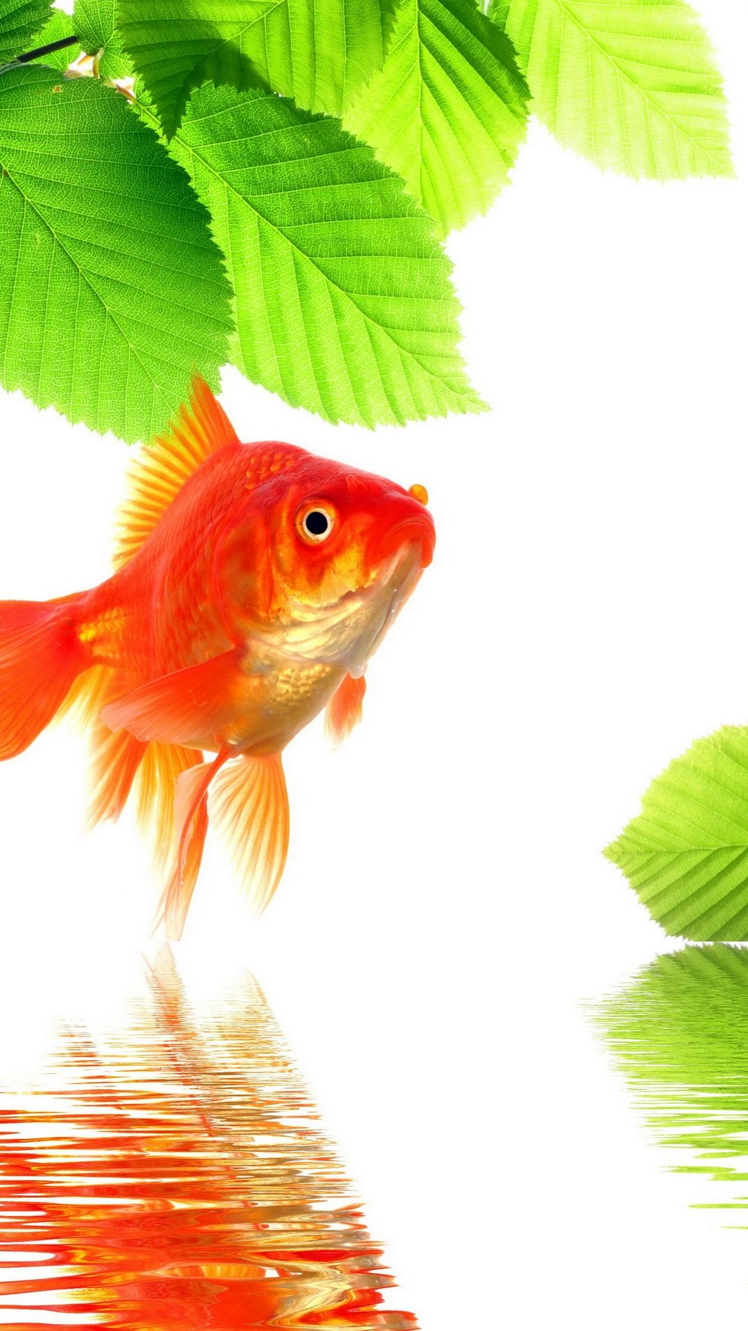 Free Tropical Fish good wallpaper for iPhone