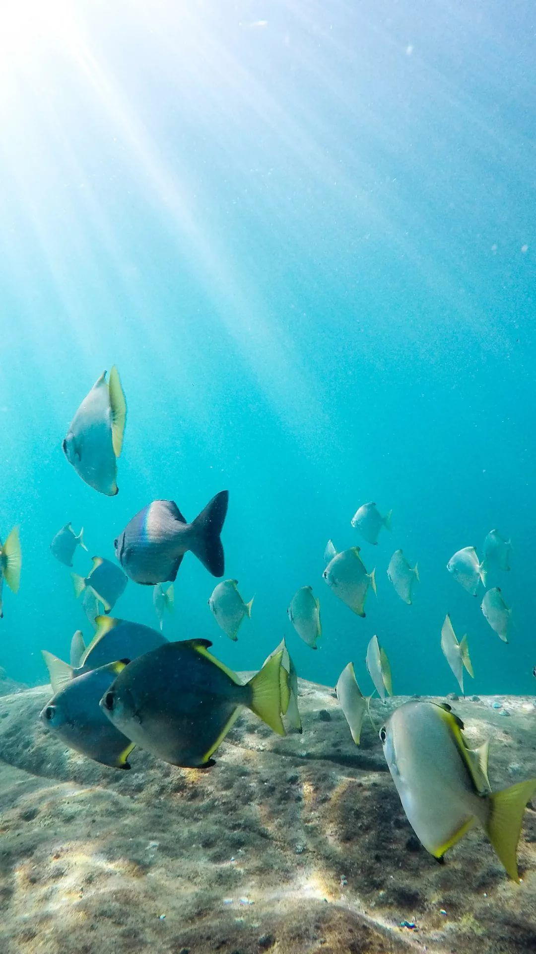 Free Tropical Fish wallpaper iPhone