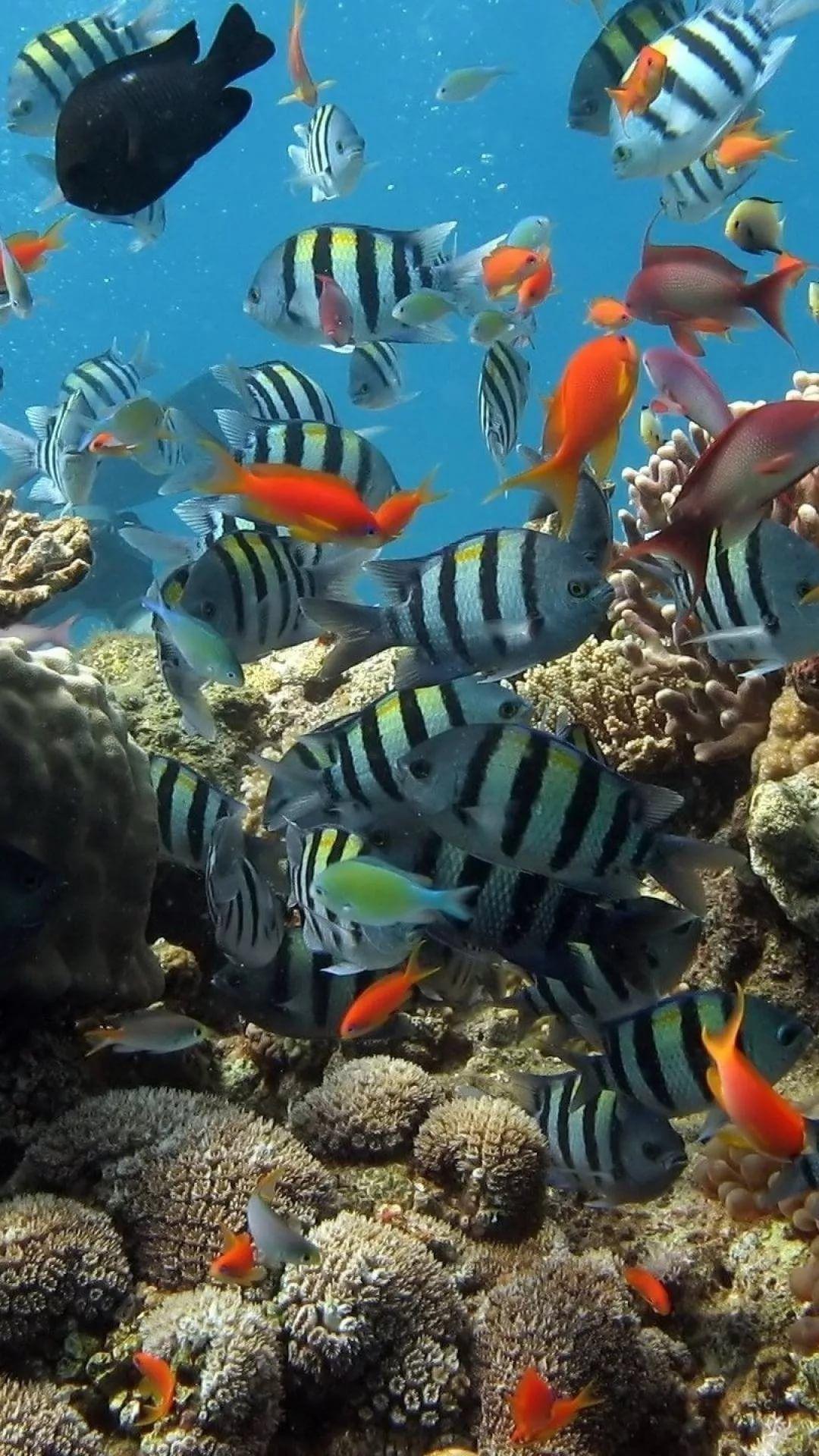 Free Tropical Fish s7 Edge Wallpaper