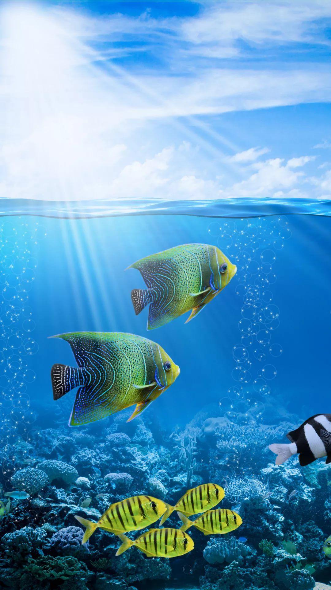 Free Tropical Fish Galaxy s8 wallpaper
