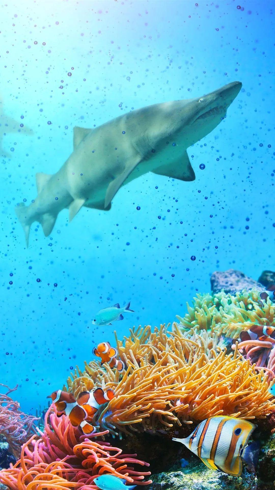 Free Tropical Fish iPhone lock screen wallpaper