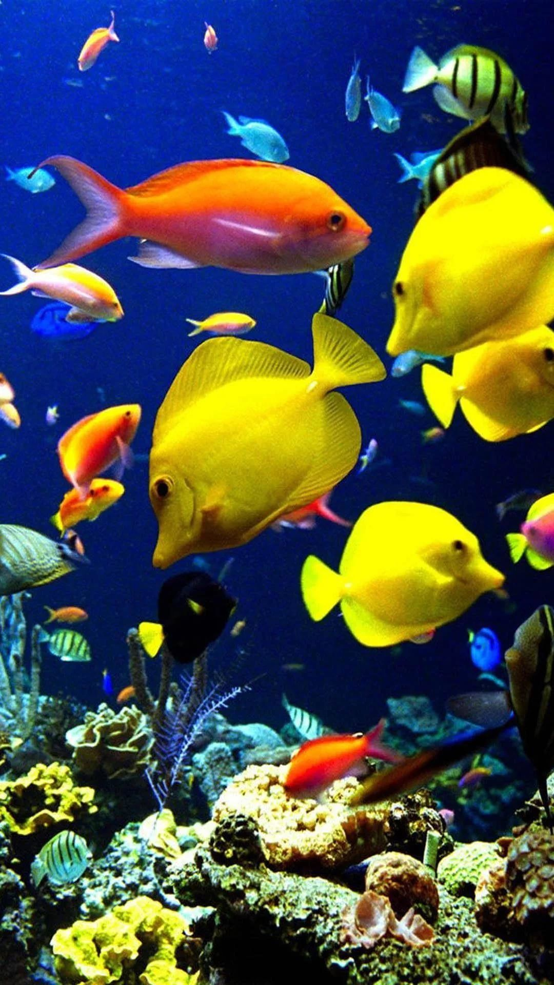 Free Tropical Fish Iphone Wallpapers Wallpaperboat
