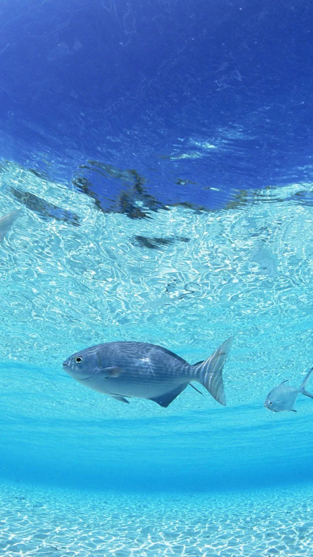 Free Tropical Fish Galaxy Wallpaper